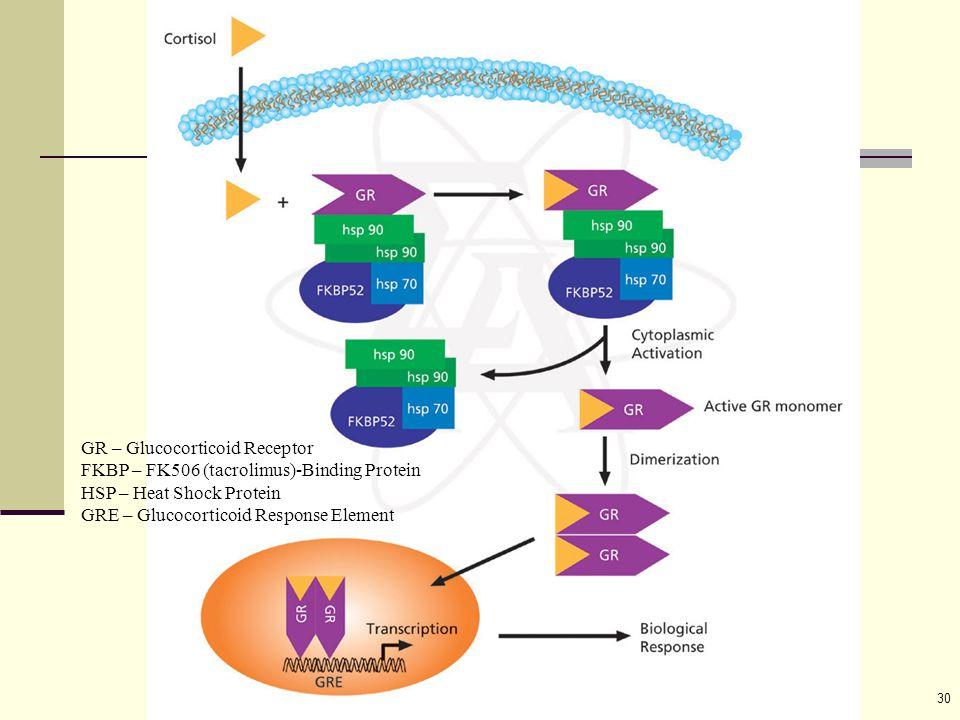30 GR – Glucocorticoid Receptor FKBP – FK506 (tacrolimus)-Binding Protein HSP – Heat Shock Protein GRE – Glucocorticoid Response Element