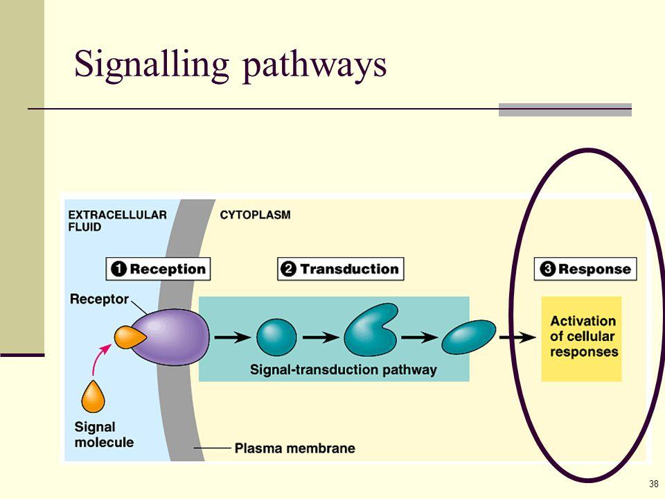 38 Signalling pathways
