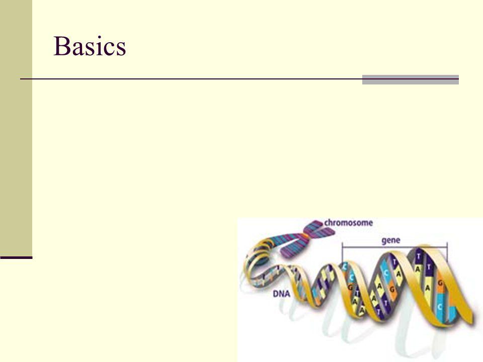 65 PCR Analyzed by Electrophoresis