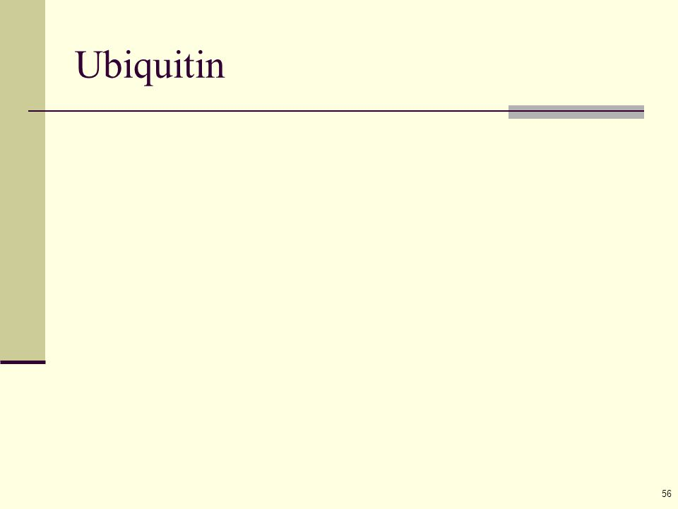 56 Ubiquitin