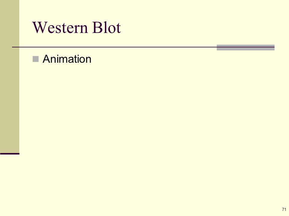 71 Western Blot Animation