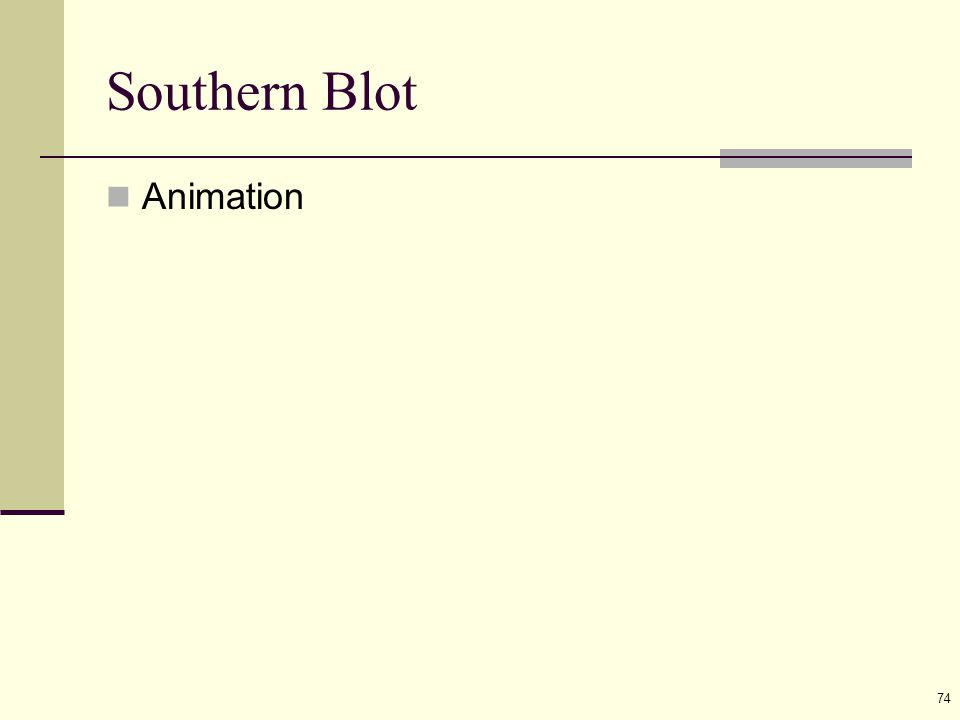 74 Southern Blot Animation