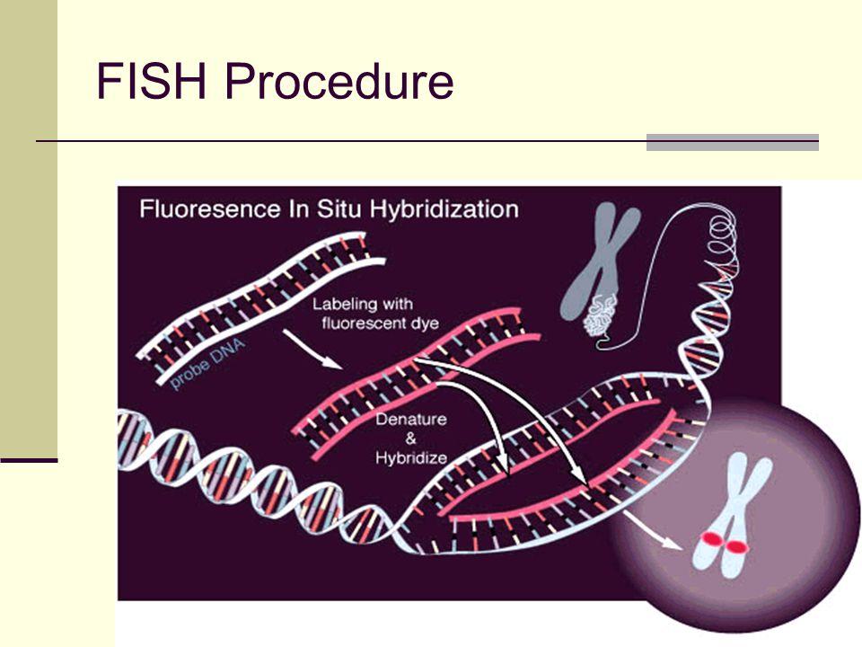 76 FISH Procedure
