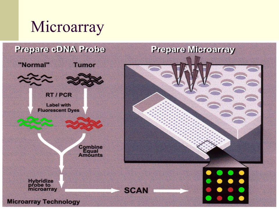 80 Microarray