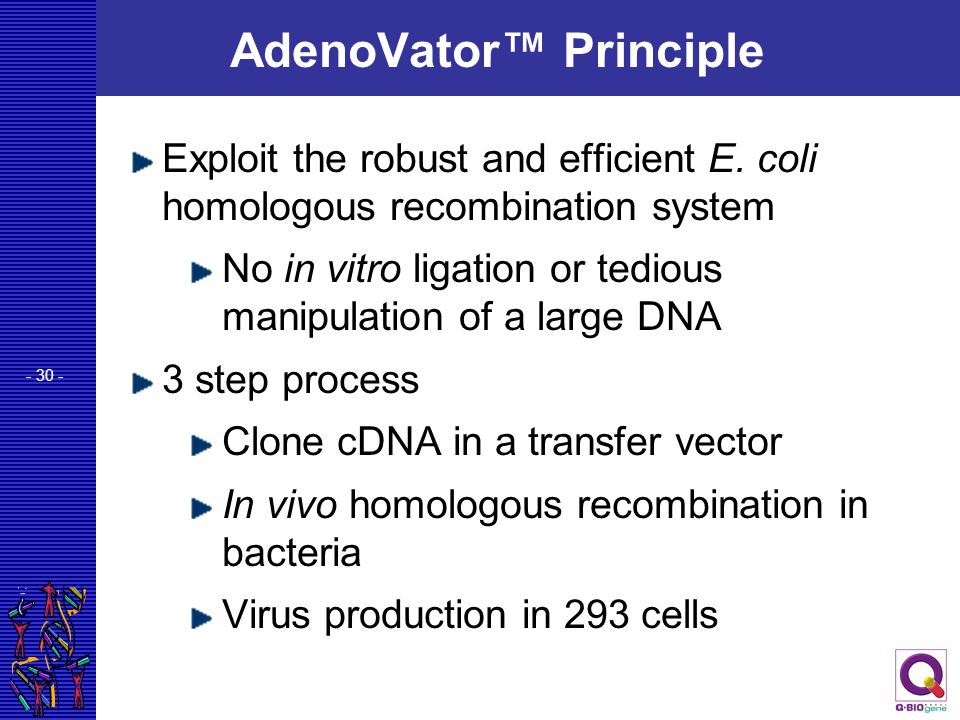- 30 - AdenoVator™ Principle Exploit the robust and efficient E. coli homologous recombination system No in vitro ligation or tedious manipulation of