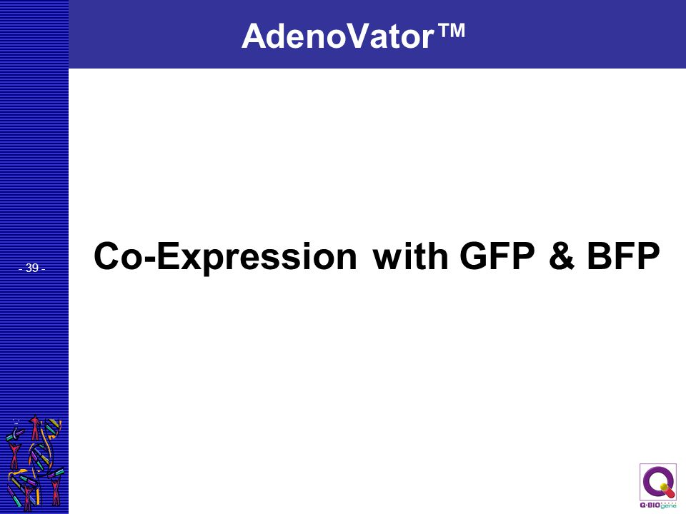 - 39 - AdenoVator™ Co-Expression with GFP & BFP