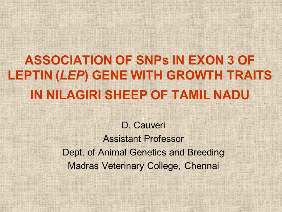 Locus (position in bp) Reference Sequence Sheep breeds CoimbatoreKilakarsal Madras Red MecheriNilagiri Ramnad White Tiruchy Black Vembur Exon 3 16973 G>A GReplaced by A in all samples 17476 C>T COnly CC genotypesCC (10) CT (3) Only CC genotypes SNPs and variations found in the Exon 3 of LEP gene 17 April 201522