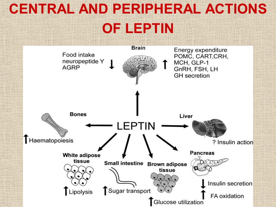 CENTRAL AND PERIPHERAL ACTIONS OF LEPTIN