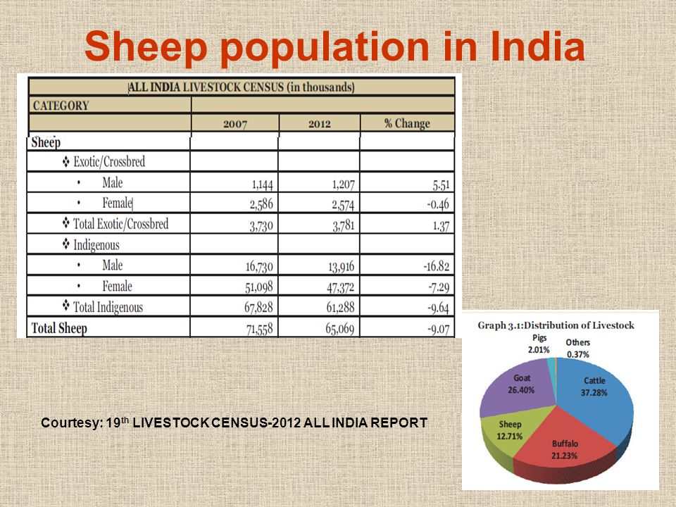 Sheep population in India Courtesy: 19 th LIVESTOCK CENSUS-2012 ALL INDIA REPORT