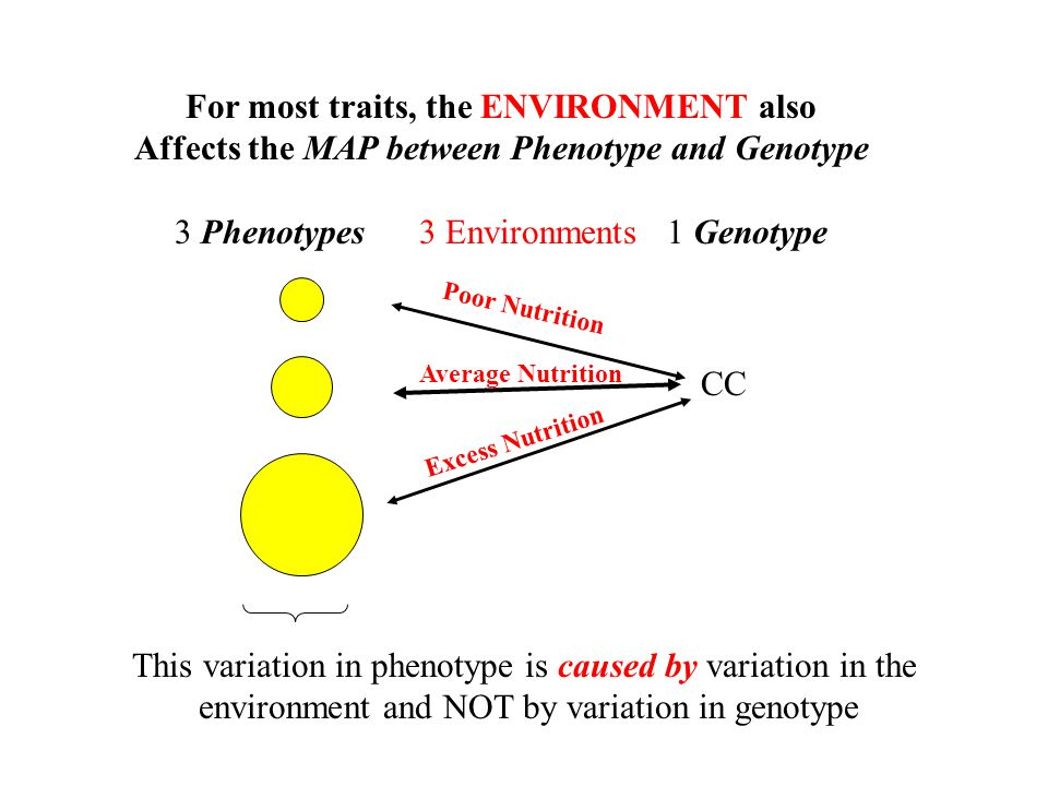 For most traits, the ENVIRONMENT also Affects the MAP between Phenotype and Genotype 3 Phenotypes 3 Environments 1 Genotype CC Average Nutrition Poor