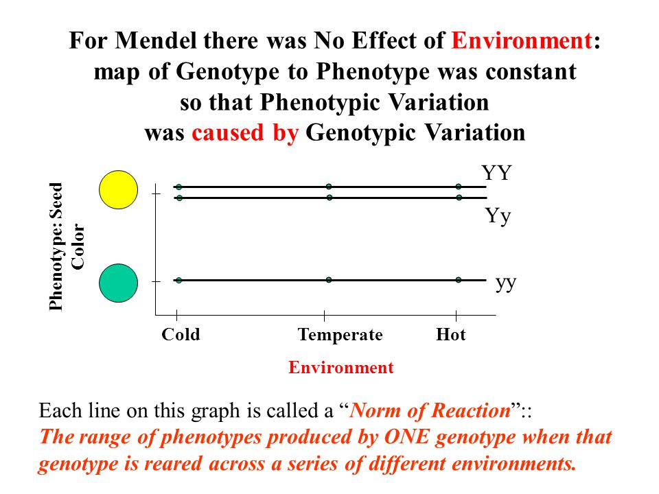 For Mendel there was No Effect of Environment: map of Genotype to Phenotype was constant so that Phenotypic Variation was caused by Genotypic Variatio