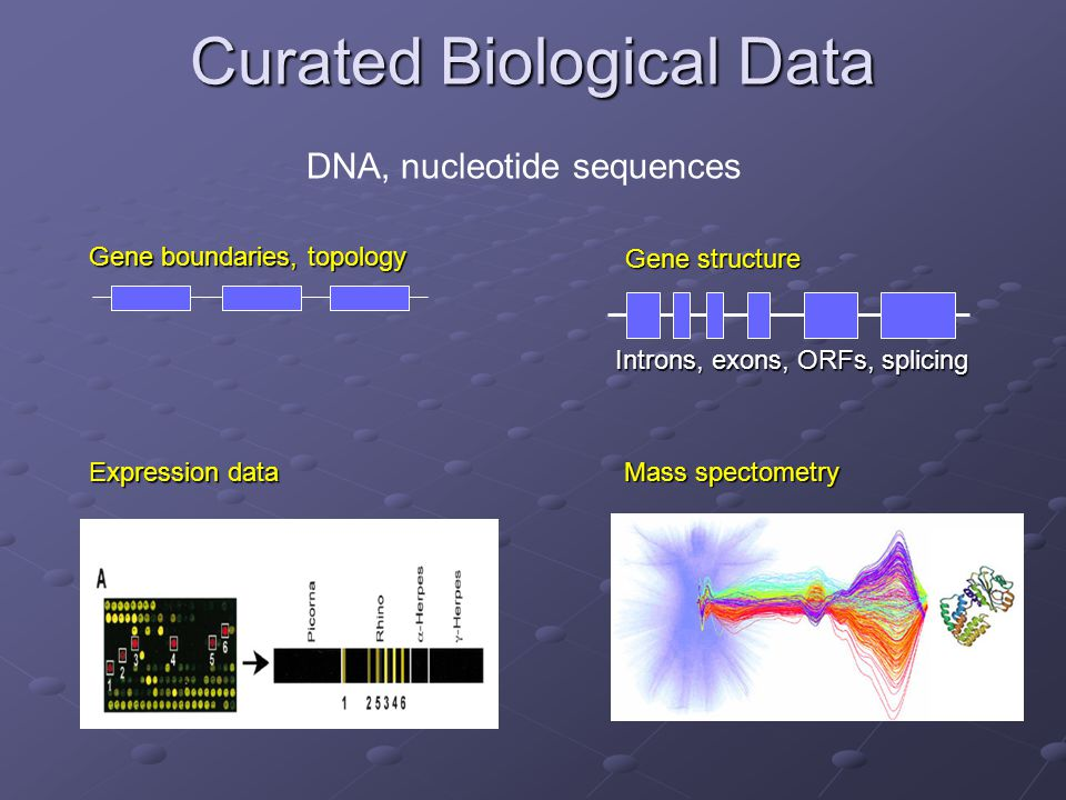 Curated Biological Data DNA, nucleotide sequences Gene boundaries, topology Gene structure Introns, exons, ORFs, splicing Expression data Mass spectometry
