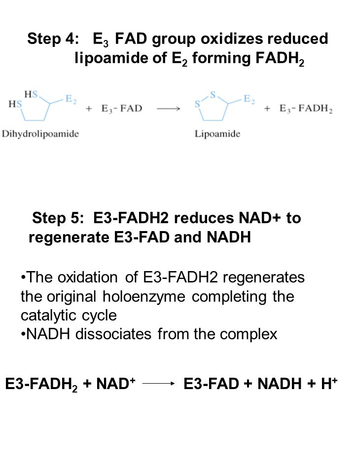 Step 4: E 3 FAD group oxidizes reduced lipoamide of E 2 forming FADH 2 Step 5: E3-FADH2 reduces NAD+ to regenerate E3-FAD and NADH The oxidation of E3-FADH2 regenerates the original holoenzyme completing the catalytic cycle NADH dissociates from the complex E3-FADH 2 + NAD + E3-FAD + NADH + H +