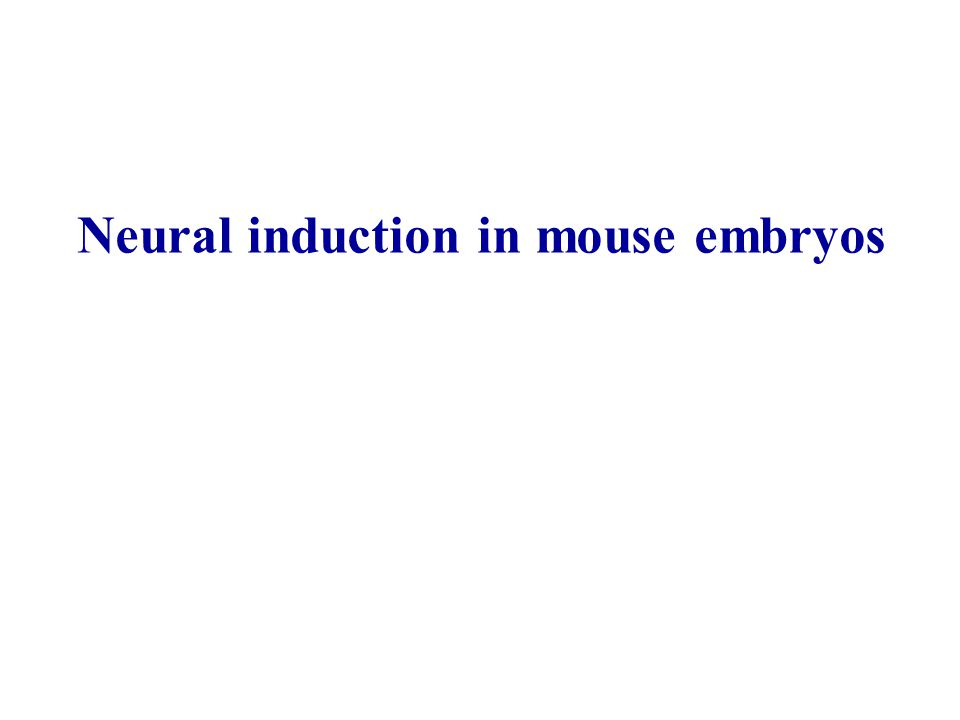 Neural induction in mouse embryos