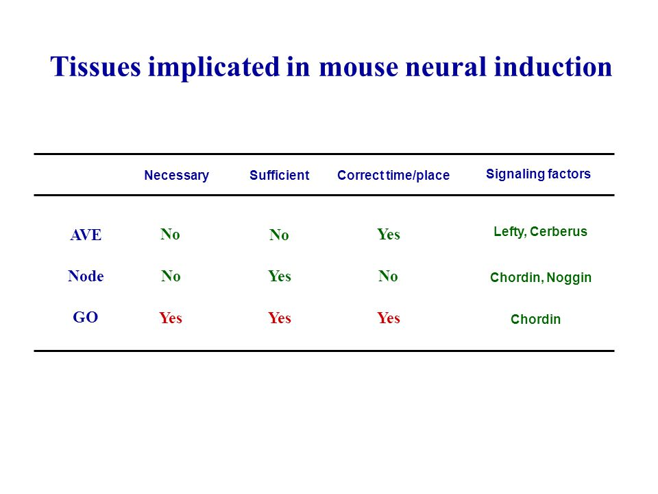 Tissues implicated in mouse neural induction NecessarySufficientCorrect time/place Signaling factors AVE Node GO No Yes No Yes Lefty, Cerberus Chordin