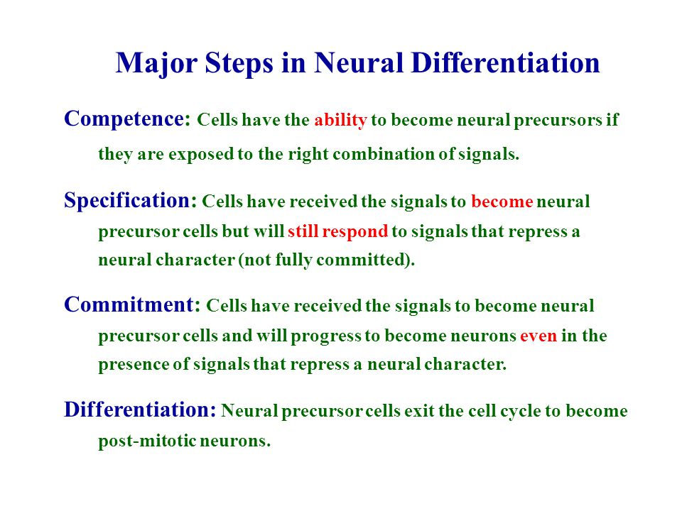 Major Steps in Neural Differentiation Competence: Cells have the ability to become neural precursors if they are exposed to the right combination of s