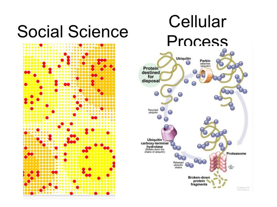 Cellular Process Social Science