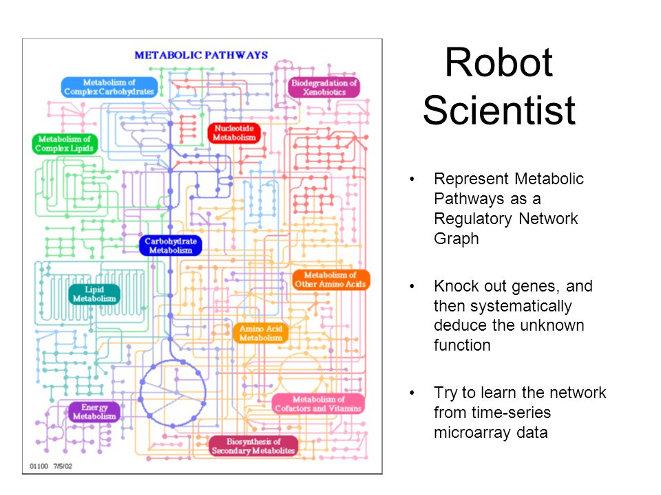 Robot Scientist Represent Metabolic Pathways as a Regulatory Network Graph Knock out genes, and then systematically deduce the unknown function Try to