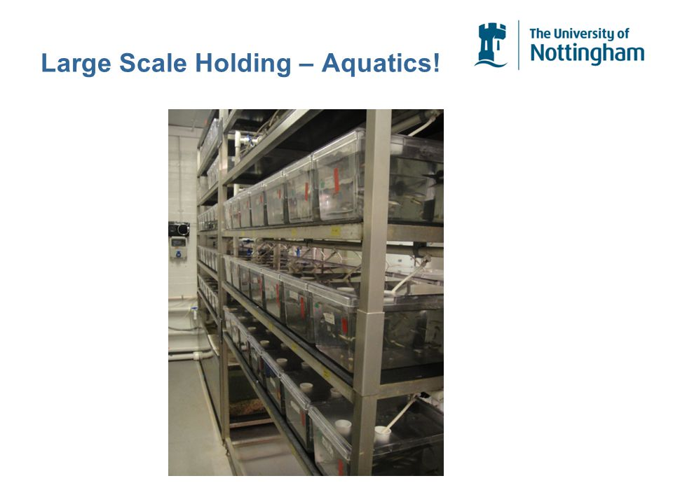 Large Scale Holding – Aquatics!