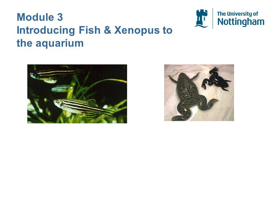 Module 3 Introducing Fish & Xenopus to the aquarium