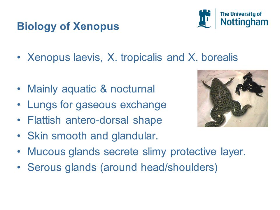 Biology of Xenopus Xenopus laevis, X. tropicalis and X.