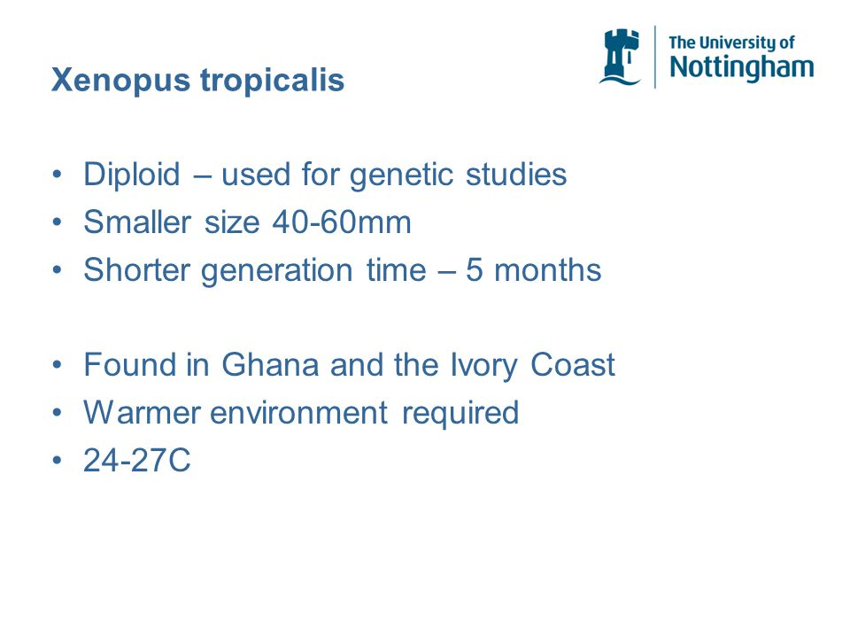 Xenopus tropicalis Diploid – used for genetic studies Smaller size 40-60mm Shorter generation time – 5 months Found in Ghana and the Ivory Coast Warmer environment required 24-27C
