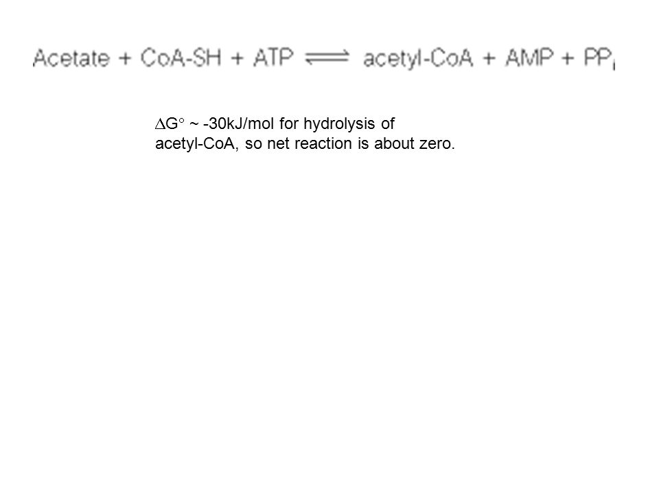  G  ~ -30kJ/mol for hydrolysis of acetyl-CoA, so net reaction is about zero.