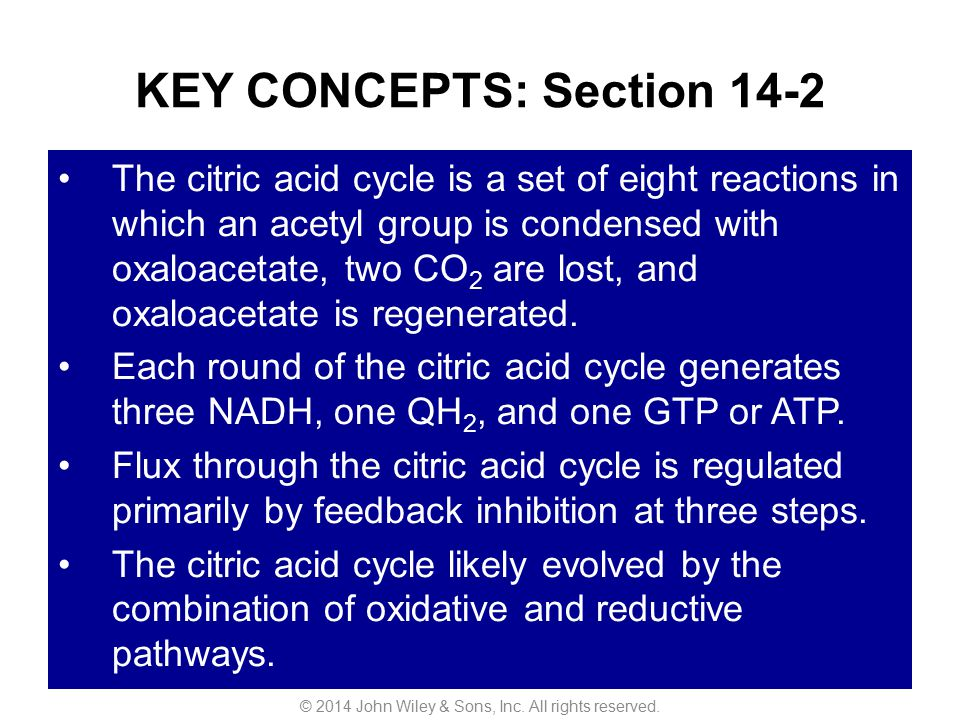 KEY CONCEPTS: Section 14-2 The citric acid cycle is a set of eight reactions in which an acetyl group is condensed with oxaloacetate, two CO 2 are los