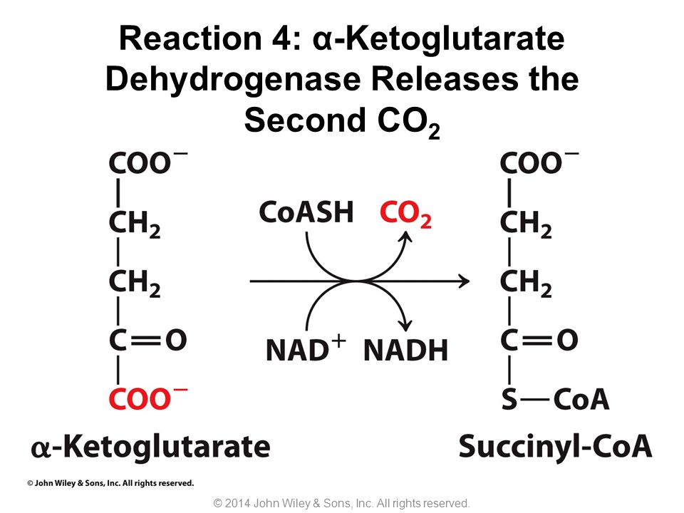 Reaction 4: α-Ketoglutarate Dehydrogenase Releases the Second CO 2 © 2014 John Wiley & Sons, Inc. All rights reserved.
