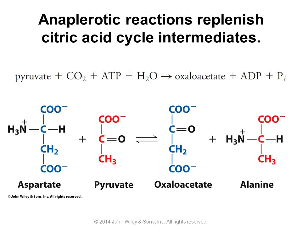 Anaplerotic reactions replenish citric acid cycle intermediates. © 2014 John Wiley & Sons, Inc. All rights reserved.