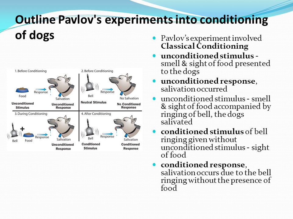 Outline Pavlov s experiments into conditioning of dogs Pavlov's experiment involved Classical Conditioning unconditioned stimulus - smell & sight of food presented to the dogs unconditioned response, salivation occurred unconditioned stimulus - smell & sight of food accompanied by ringing of bell, the dogs salivated conditioned stimulus of bell ringing given without unconditioned stimulus - sight of food conditioned response, salivation occurs due to the bell ringing without the presence of food