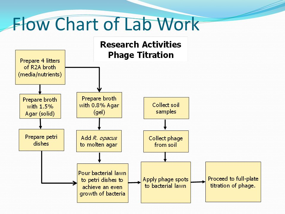 Flow Chart of Lab Work