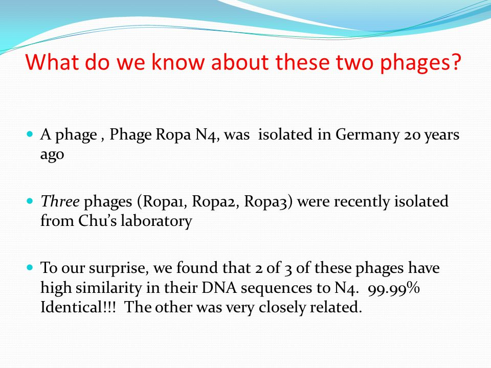 What do we know about these two phages? A phage, Phage Ropa N4, was isolated in Germany 20 years ago Three phages (Ropa1, Ropa2, Ropa3) were recently