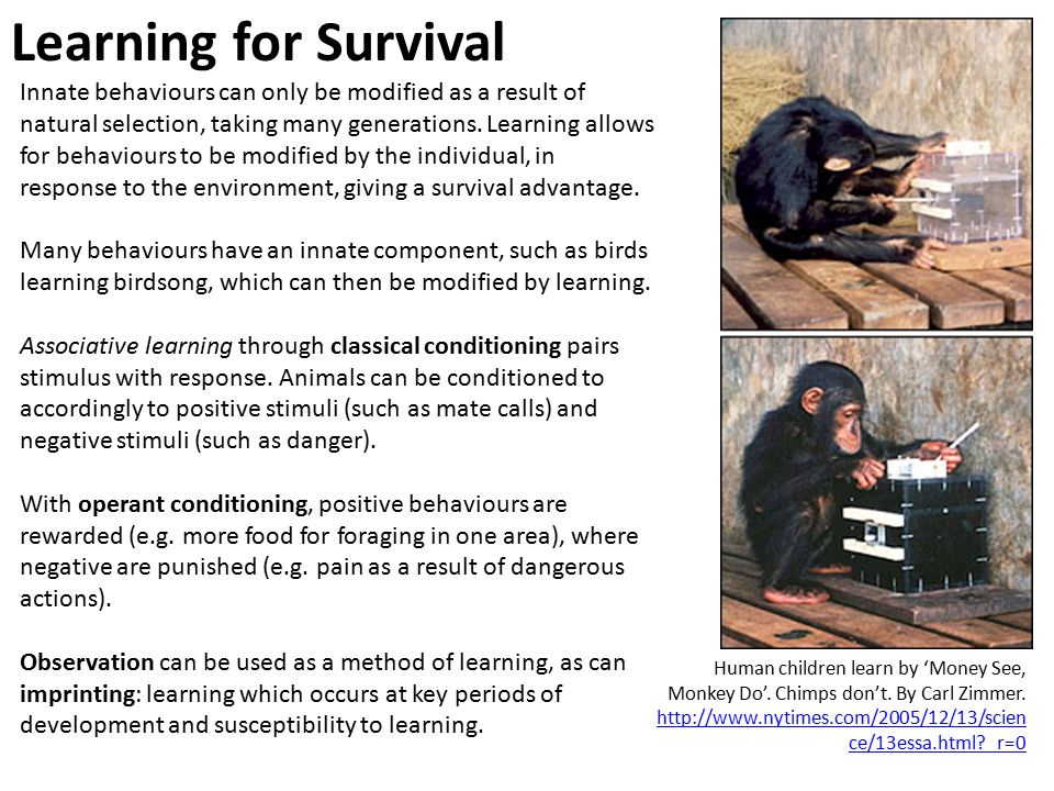 Learning for Survival Innate behaviours can only be modified as a result of natural selection, taking many generations.
