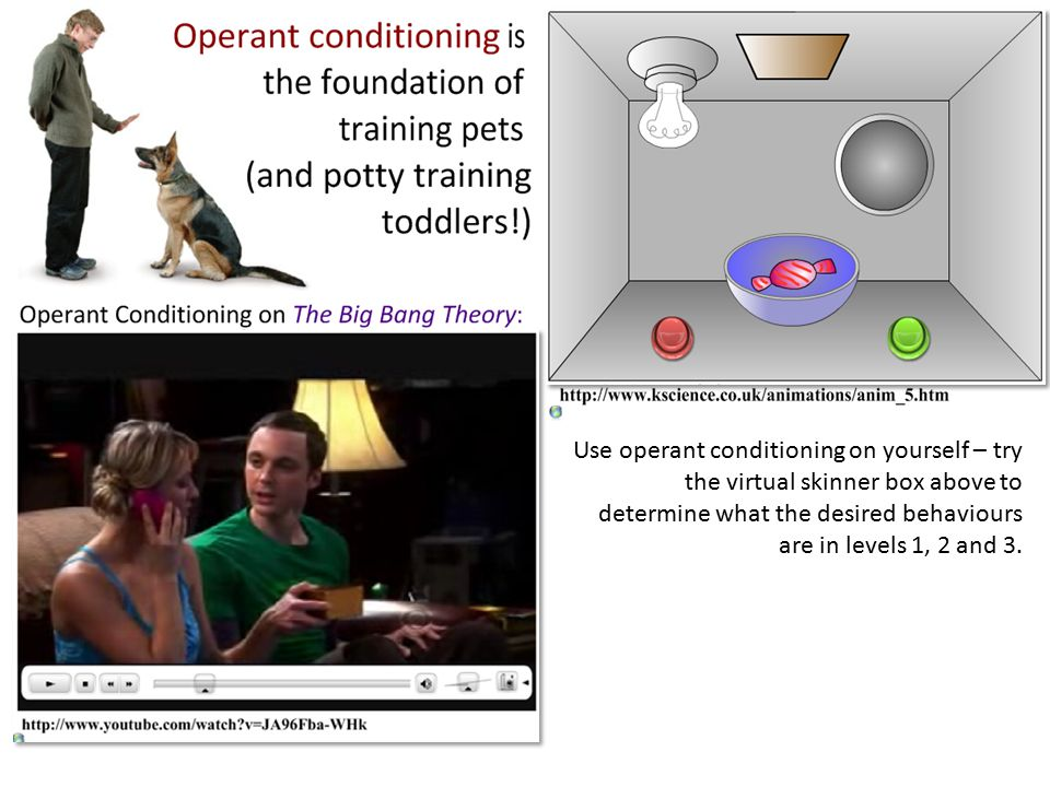 Use operant conditioning on yourself – try the virtual skinner box above to determine what the desired behaviours are in levels 1, 2 and 3.
