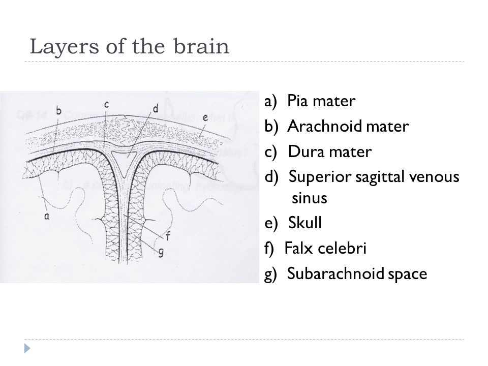 Layers of the brain a) Pia mater b) Arachnoid mater c) Dura mater d) Superior sagittal venous sinus e) Skull f) Falx celebri g) Subarachnoid space