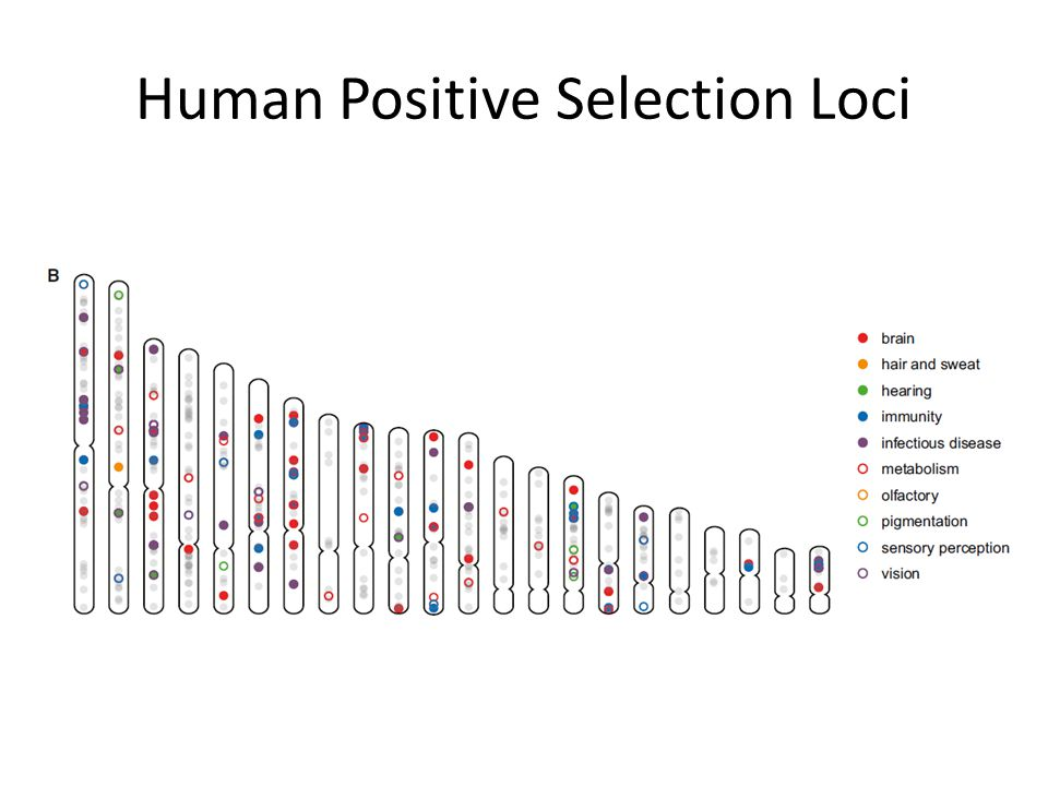 Human Positive Selection Loci
