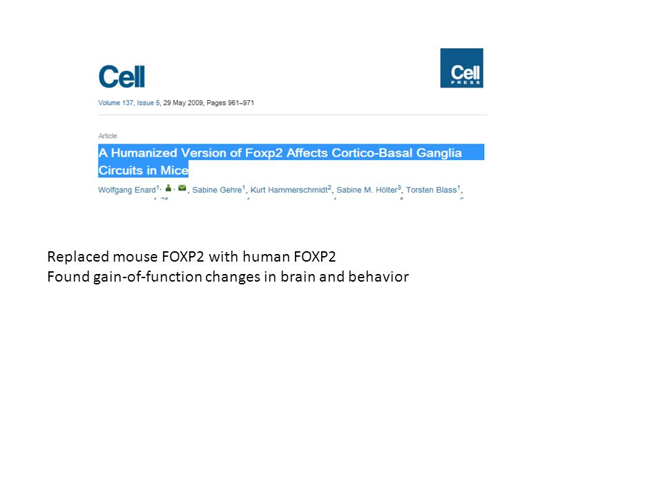 Replaced mouse FOXP2 with human FOXP2 Found gain-of-function changes in brain and behavior