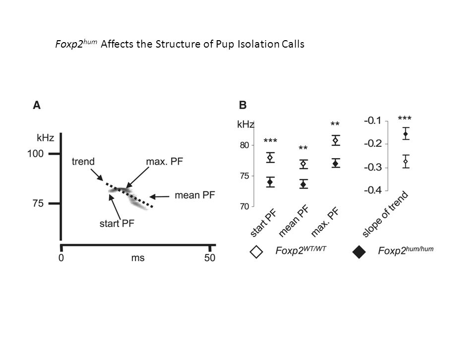 Foxp2 hum Affects the Structure of Pup Isolation Calls