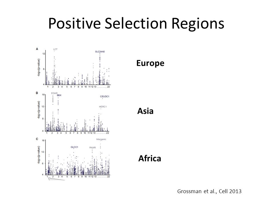 Positive Selection Regions Europe Asia Africa Grossman et al., Cell 2013