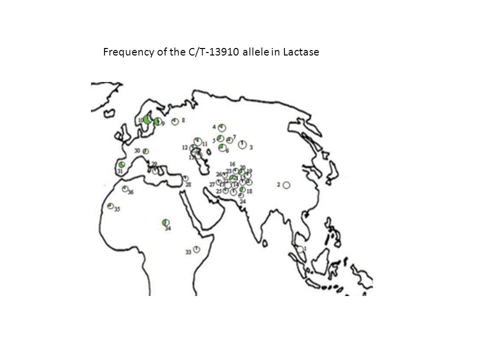 Frequency of the C/T-13910 allele in Lactase