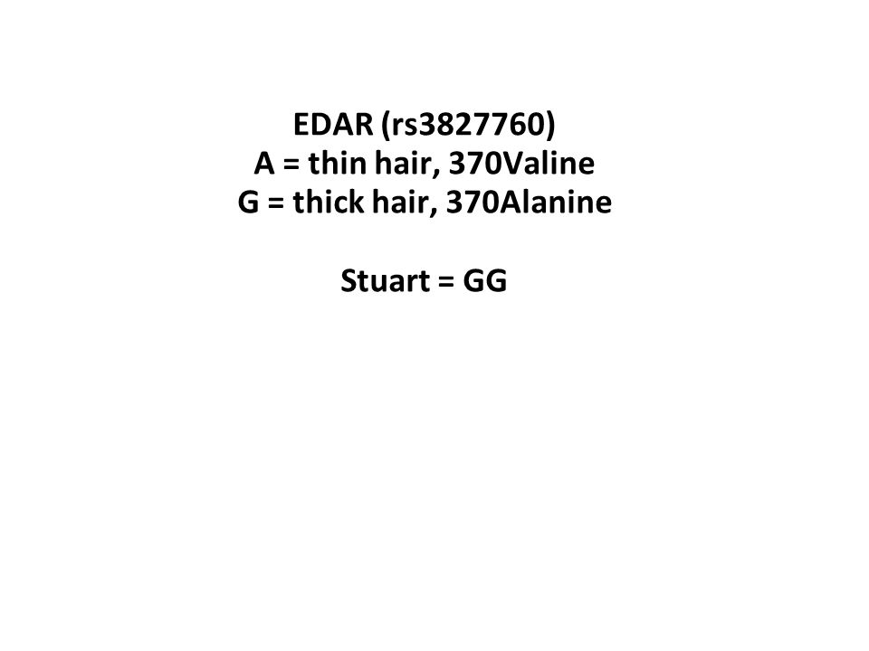 EDAR (rs3827760) A = thin hair, 370Valine G = thick hair, 370Alanine Stuart = GG