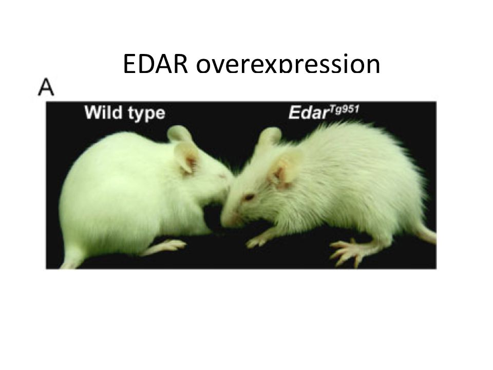 EDAR overexpression