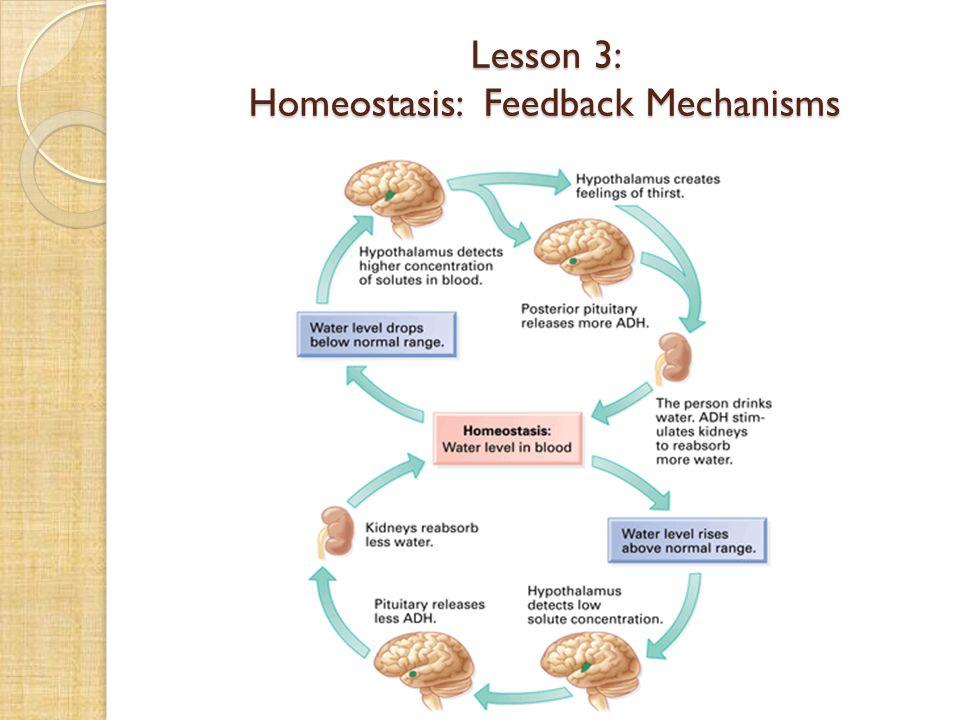 Lesson 3: Homeostasis: Feedback Mechanisms