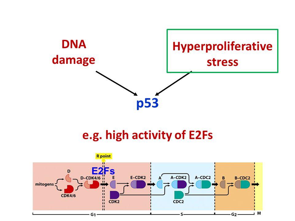 p53 DNA damage Hyperproliferative stress E2Fs e.g. high activity of E2Fs