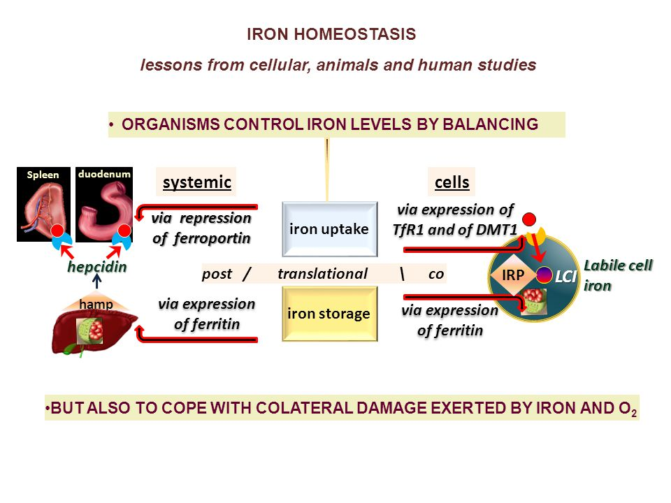 PLASMA NTBI for defining the degree of systemic iron overload (diagnostically/ prognostically) .