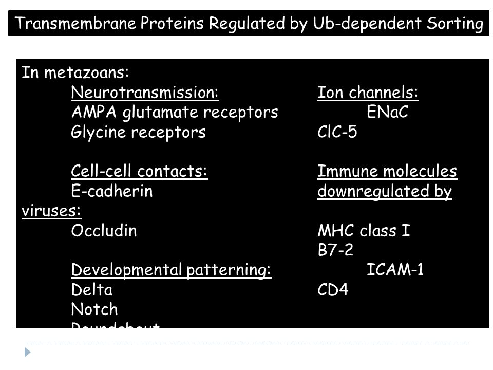 Transmembrane Proteins Regulated by Ub-dependent Sorting In metazoans: Neurotransmission:Ion channels: AMPA glutamate receptorsENaC Glycine receptorsClC-5 Cell-cell contacts:Immune molecules E-cadherindownregulated by viruses: OccludinMHC class I B7-2 Developmental patterning:ICAM-1 DeltaCD4 Notch Roundabout