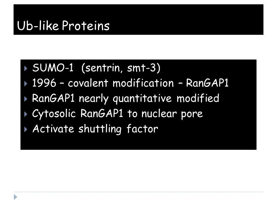 Ub-like Proteins  SUMO-1 (sentrin, smt-3)  1996 – covalent modification – RanGAP1  RanGAP1 nearly quantitative modified  Cytosolic RanGAP1 to nuclear pore  Activate shuttling factor