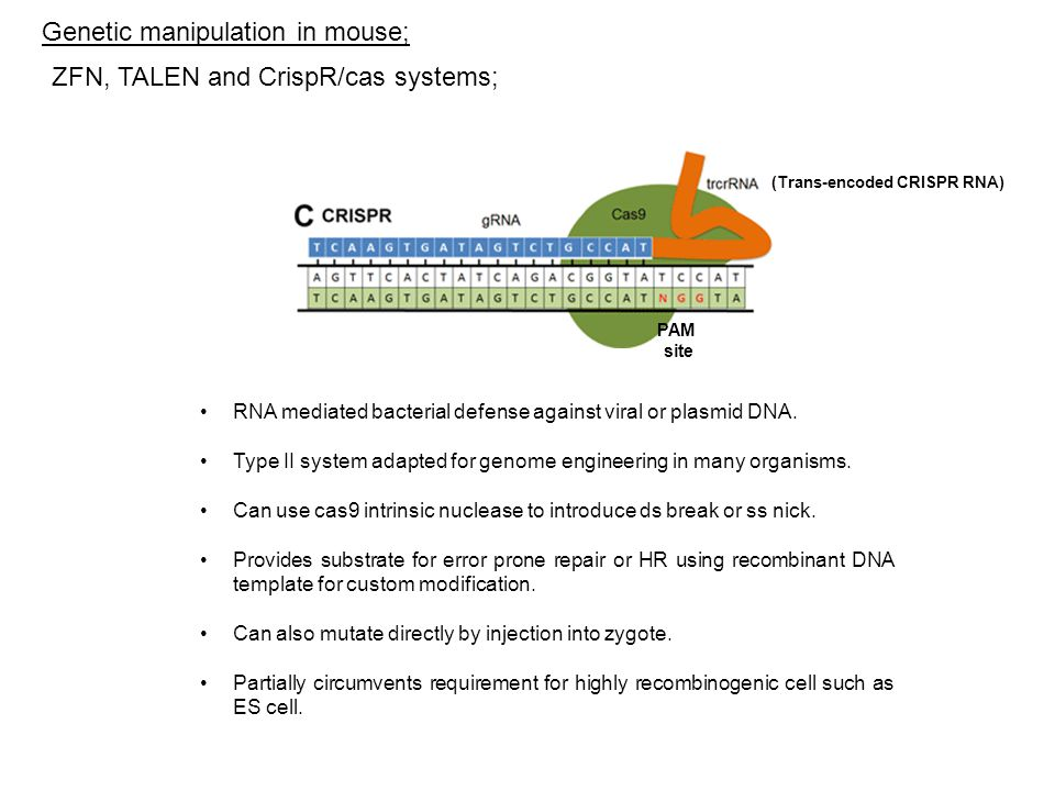 RNA mediated bacterial defense against viral or plasmid DNA.
