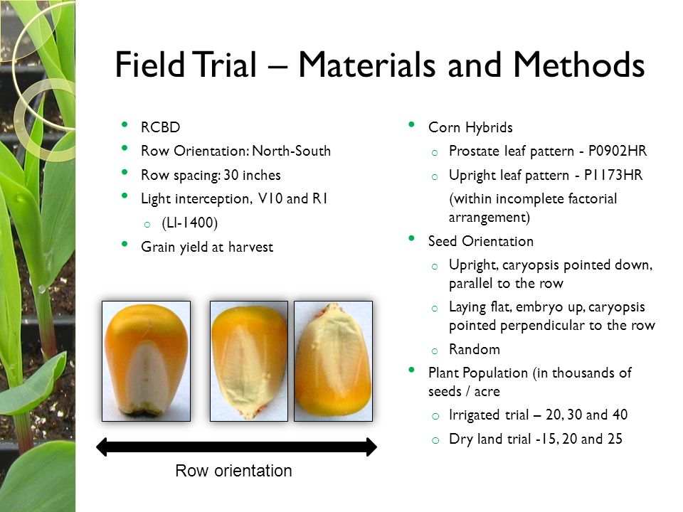 Field Trial – Materials and Methods RCBD Row Orientation: North-South Row spacing: 30 inches Light interception, V10 and R1 o (LI-1400) Grain yield at